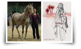 Festival du cheval Arabe